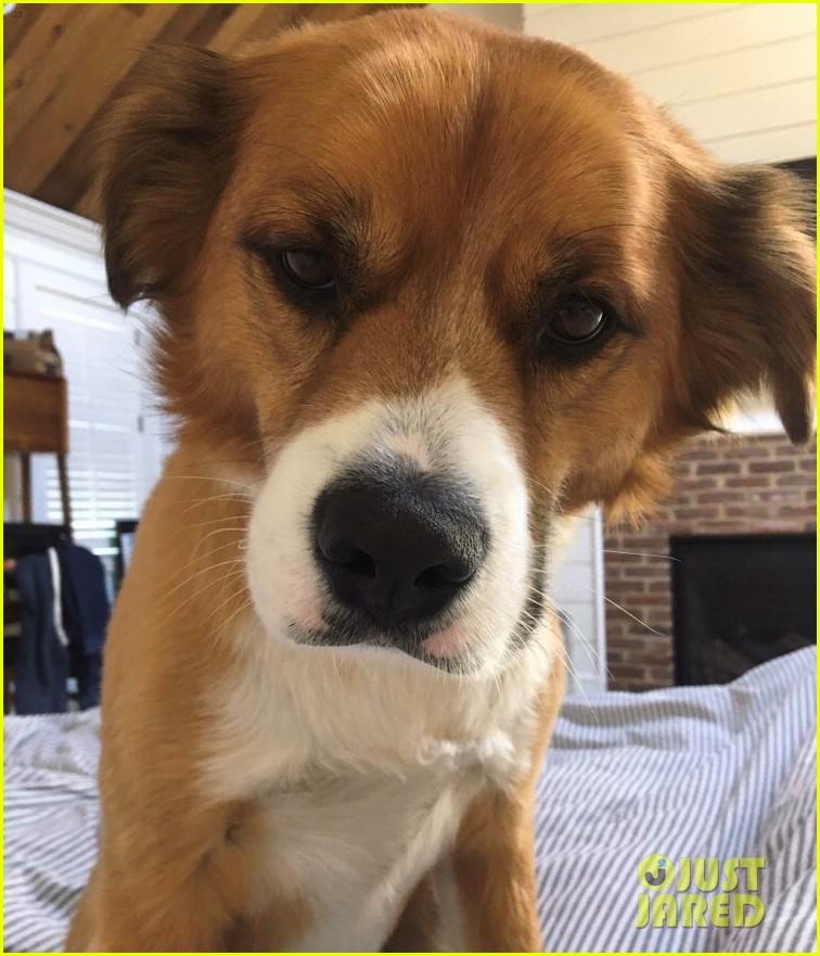 fans sharing pics of chris evans with dog dodger 114482818