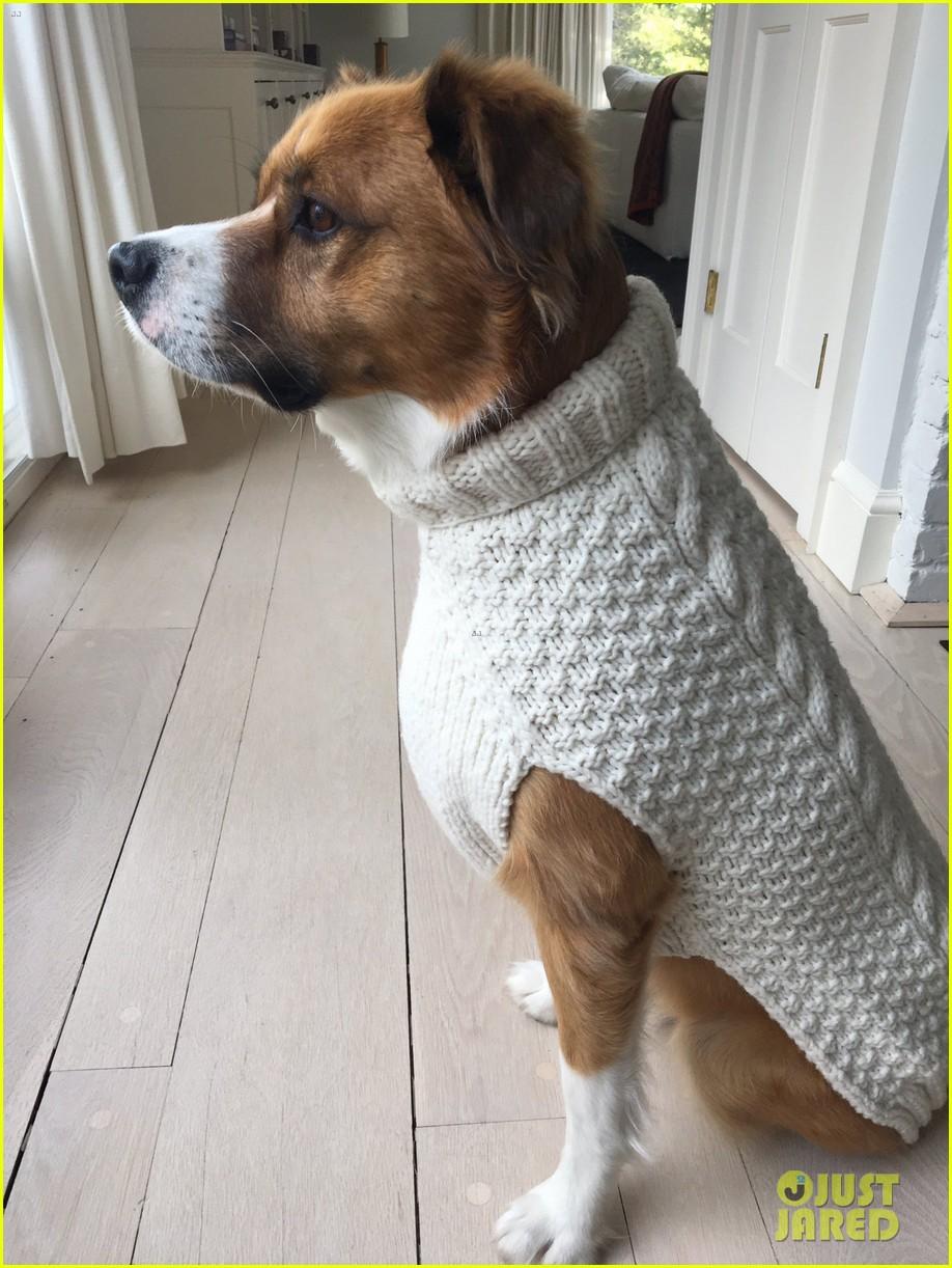 fans sharing pics of chris evans with dog dodger 134482820