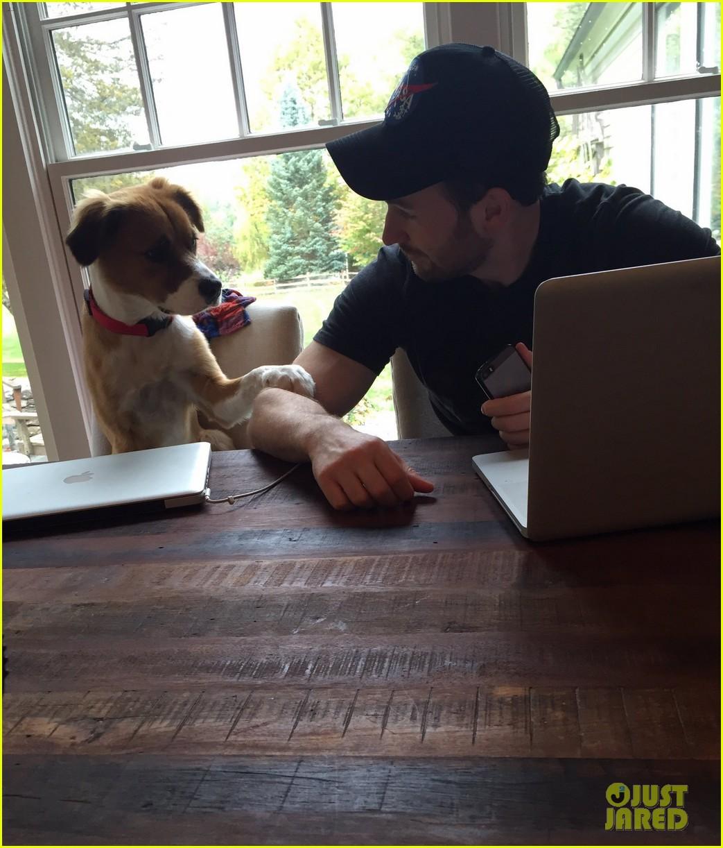 fans sharing pics of chris evans with dog dodger 264482833