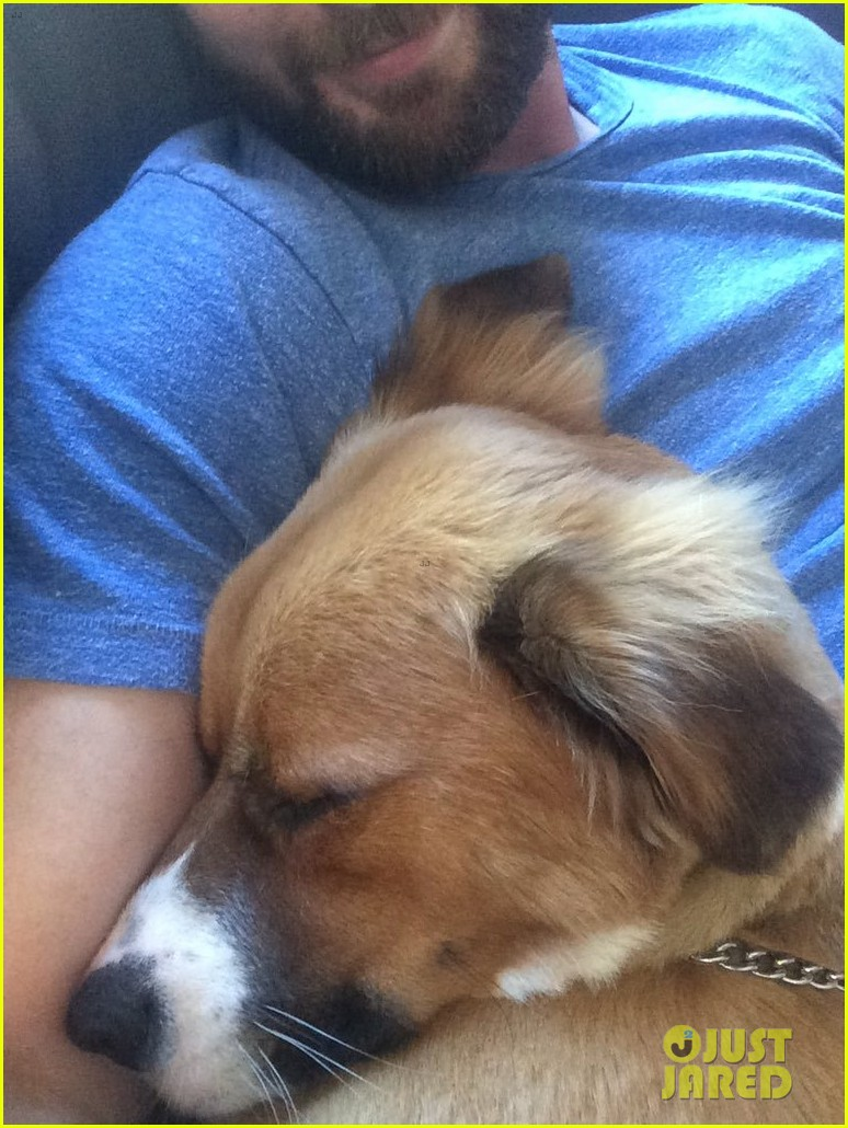 fans sharing pics of chris evans with dog dodger 274482834