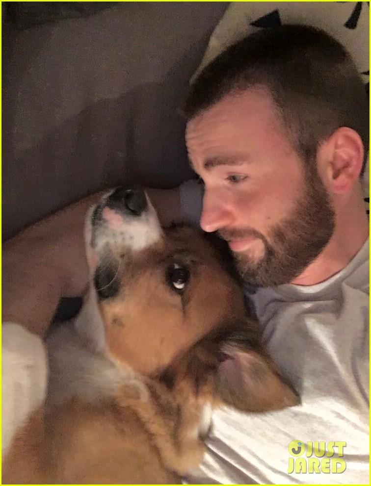 fans sharing pics of chris evans with dog dodger 064495342