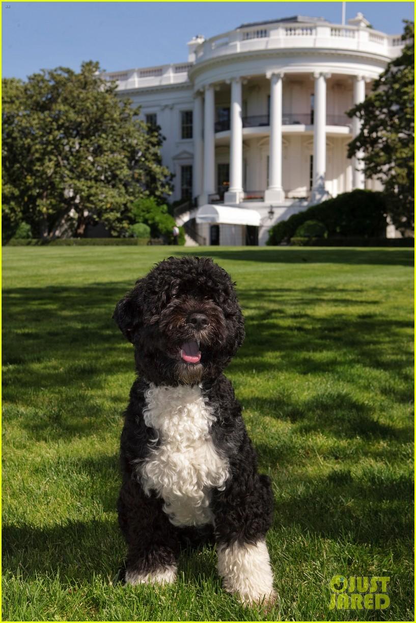 obamas mourn death of dog bo 024553769