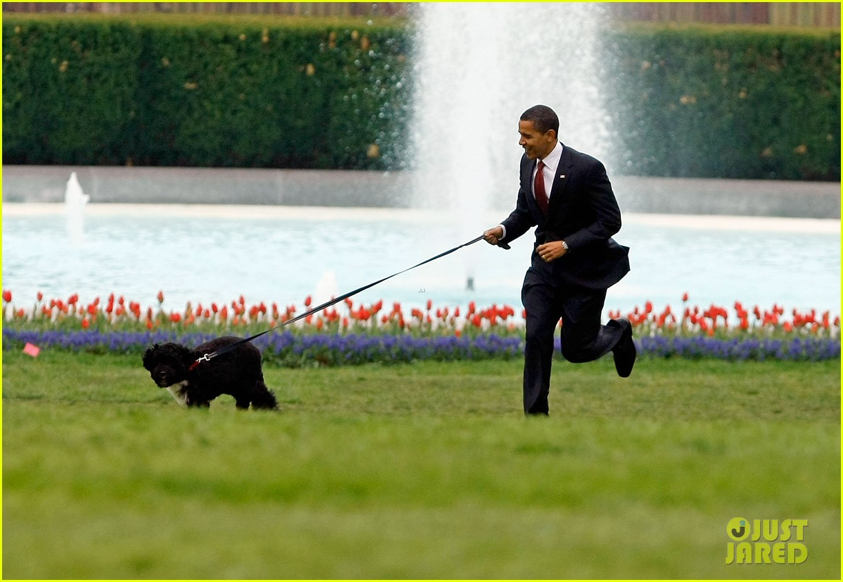 obamas mourn death of dog bo 104553777