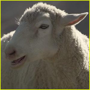 Honda Super Bowl Commercial 2016: Sheeps Sing Queen!