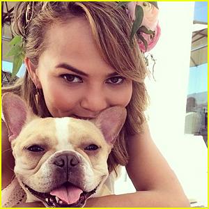 Chrissy Teigen Mourns the Death of Her Beloved Dog Pippa