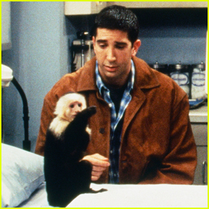 David Schwimmer Was 'Jealous' of Monkey Marcel on 'Friends,' Animal Trainer Says