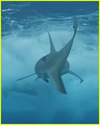 Scary New Video Surfaces of 'Jackass' Star Shark Attack