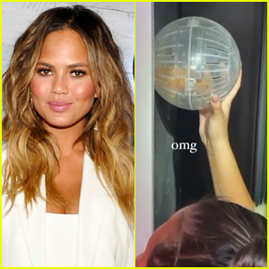 Chrissy Teigen Rescues Family Hamster From Inside the Wall After It Goes Missing for 3 Days